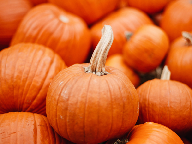 How to have a COVID safe Halloween